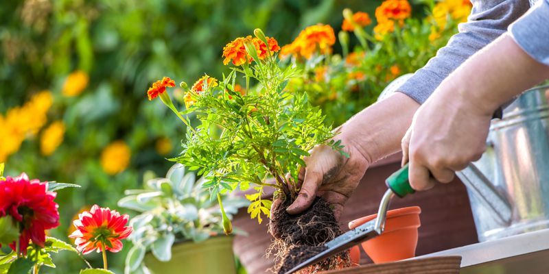 Cross Keys Estates - Residential Sales and Lettings - The Gardening Club
